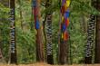 bosque de Oma, ,1984, Agustin Ibarrola,Kortezubi, Vizcaya,Euzkadi, Spain