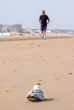 A Sitting Seagull Watches A Jogger (out Of Focus) Approaching On The Beach Of Noordwijk; Its Boulevard Visible In The Background.