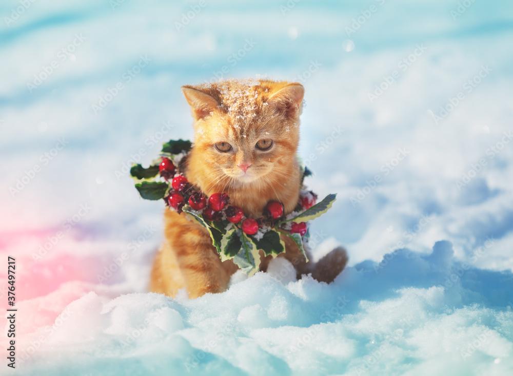 Fototapeta Portrait of a kitten wearing a Christmas wreath. Cat sitting on the snow in winter