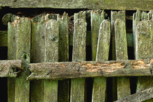 Old Wooden Rotten Fence Covered With Green Moss. Background, Pattern.