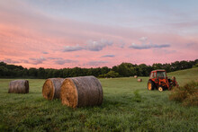Freshly Rolled Hay Bales Rest ...