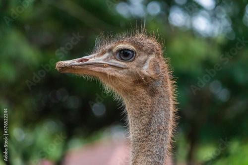 Fényképezés Ostrich Eye Close up detailed Photograph