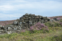 4 - Dry Stone Wall Amongst Purple Pink Heather Moorlands.