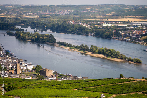 Fotomural view on hillside vineyards along the Rhine River and the fulder aue island in th