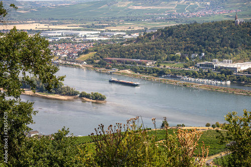 Fotografie, Obraz view on hillside vineyards along the Rhine River and the fulder aue island in th