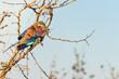 canvas print picture - South Africa Safari