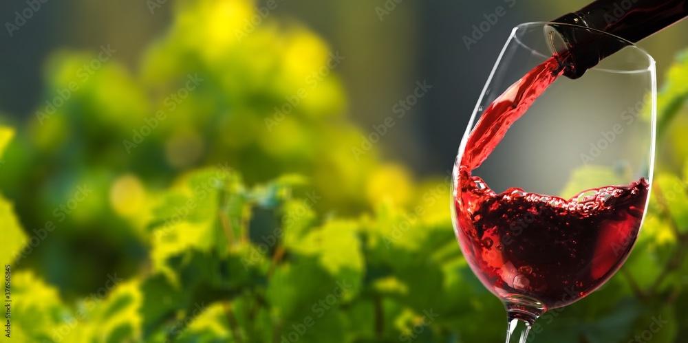 Fototapeta Red wine and glass on vineyard background