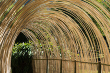 Shaded Path In The Bamboo Grove Of Anduze (France)
