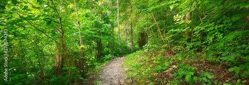 Fotografie, Obraz Footpath in a green deciduous forest on a sunny day