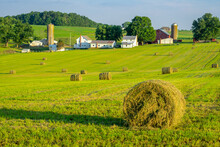 Round Hay Bales On Slightly Rolling Hills In Amish Country.  Farm And Farm House In Background.
