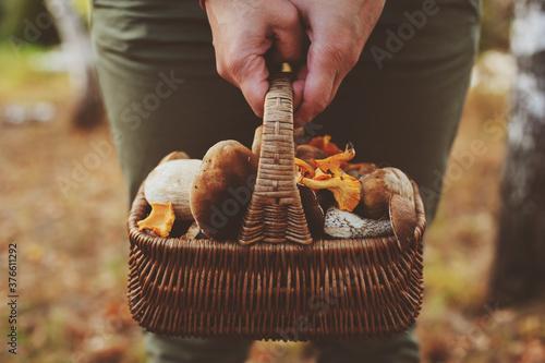 Obraz na płótnie picking wild mushrooms in autumn forest