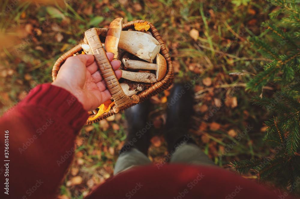 Fototapeta picking wild mushrooms in autumn forest. Hand holding basket full of mushrooms, lifestyle shot.