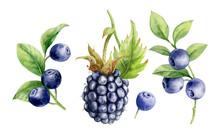 Watercolor Illustration. Set O...