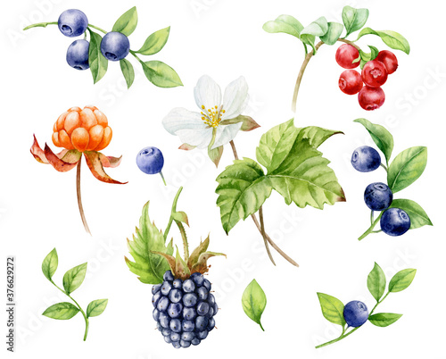 Watercolor illustration. Set of berries. Blueberries, blackberries, cloudberries with leaves and flowers, cranberries on a white background.