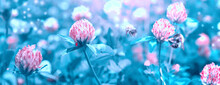 Beautiful Artistic Spring Wild Meadow Clover Flowers, Pink And Blue Colors With Bee, Ladybug, Macro. Soft Focus Nature Background. Delicate Pastel Toned Image. Nature Floral Springtime