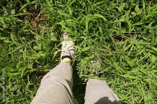 Fotomural 夏の草むらに一歩踏み出す