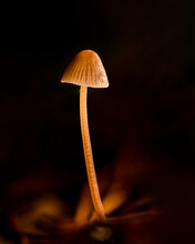 Mushroom In The Forest In The ...