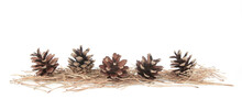 Border Of Pines And Needles. Dry Pine Cones And  Needles Isolated On White Background.