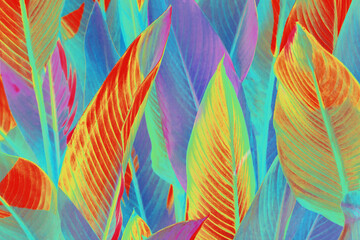Fototapeta Do hotelu background of colorful leaves illuminated by the sun