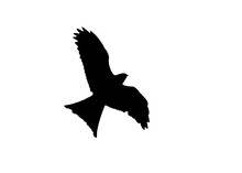 Red Kite Raptor Bird Black Sil...