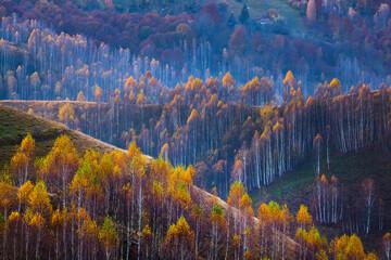 Fototapeta Drzewa Beautiful autumnal landscape with colorful trees.