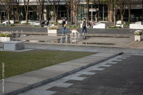 Obraz na plátně 犬の散歩をしている老夫婦 優雅