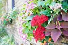 Cflower In Garden