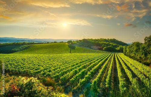 Vineyard at sunset. Castellina in Chianti, Tuscany, Italy Billede på lærred