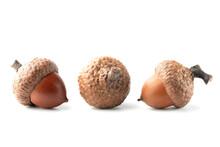 Three Oak Acorns Isolated On W...