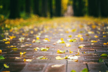 Autumn City Park And Yellow Leaves On Wet Sidewalk. Beautiful Landscape, Background And Texture