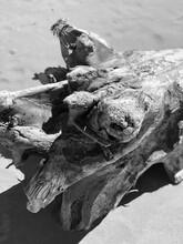 Driftwood On Lake Superior