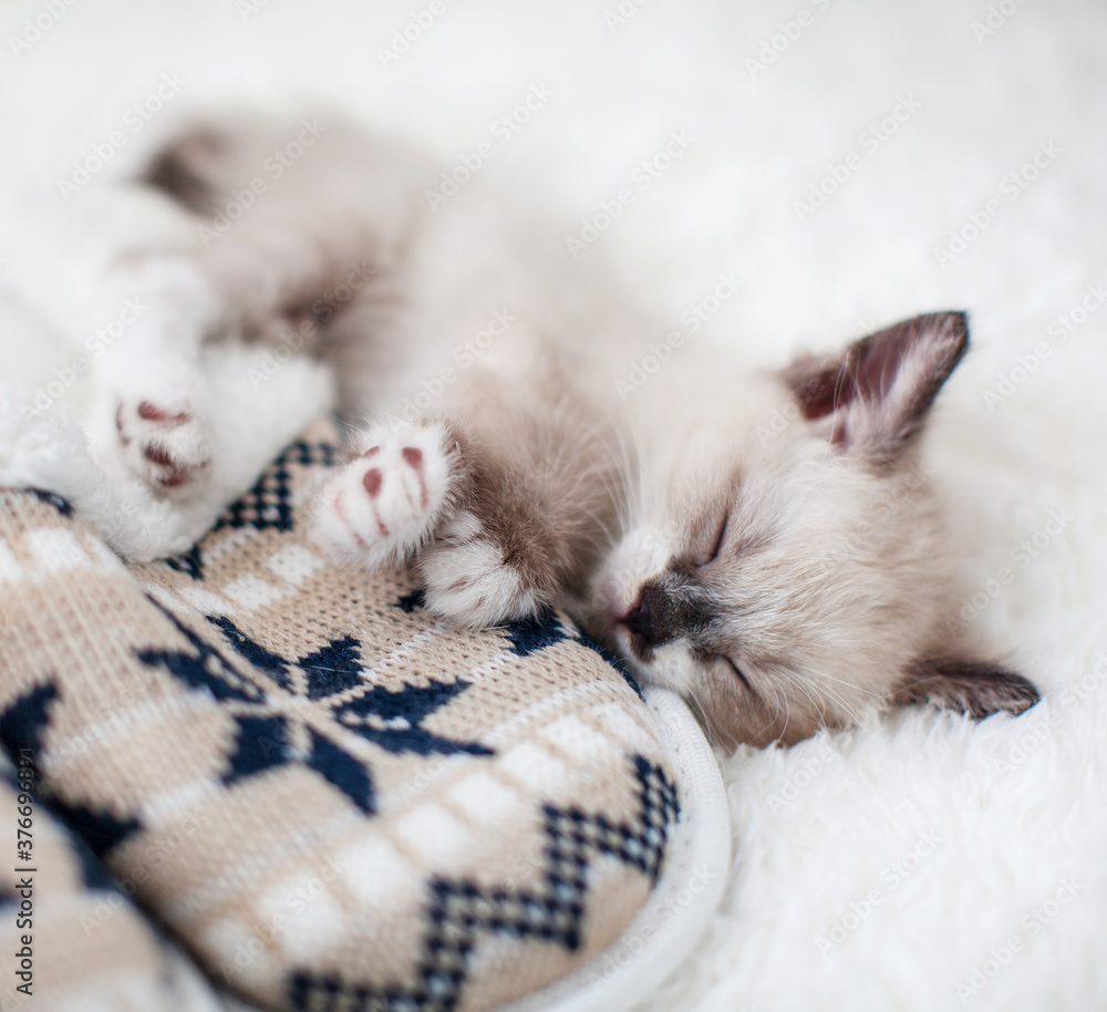 Fototapeta Kitten sleep on plaid near home slippers