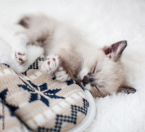 Kitten sleep on plaid near home slippers
