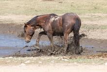 Wild Horse At A Utah Desert Wa...