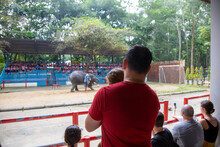 Danimal Abuse. Dad Is Holding A Toddler In His Arms And Watching The Elephants Perform. Back View