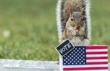 Squirrel VOTE Booth Election C...
