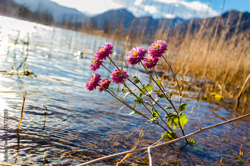 Flowers lilac in the Potrerillos Lake.
