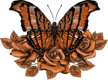 Beautiful Brown Butterfly And Roses Vector Illustration