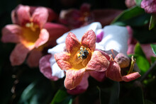 A Bee Inside Of A Pink And Yel...