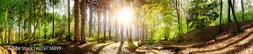 Photo Forest panorama with a stream and a bright sun shining through the trees