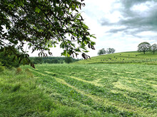 Landscape, With A Newly Cut Field, With Cattle And Trees In The Distance Near, Gargrave, Skipton, UK