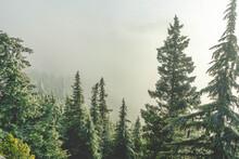 Fog Surrounding Trees On Mount...