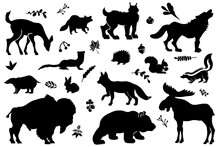 Forest Animals Detailed Vector Silhouettes. Woodland Clipart.