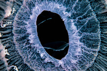 Close Up Of Jellyfish Underwater