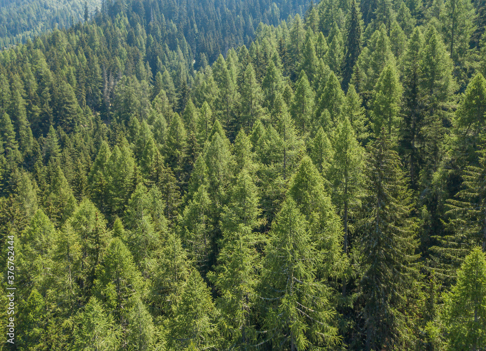 Fototapeta Aerial view of serene and tranquil coniferous forest and its canopy. Idyllic Tree tops in Swiss mountains seen from above.