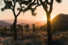 Joshua Tree National Park At D...
