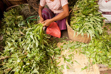 Woman Sorting Vegetables At Lo...