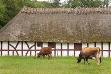 Organic Farm And Garden In Funen Ethnographic Village, Odense, Denmark