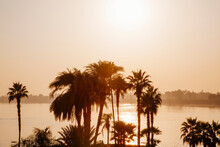 Palm Trees On Nile River, Luxor, Egypt