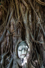 Buddha Head In A Tree, Historic City Of Ayutthaya, Thailand